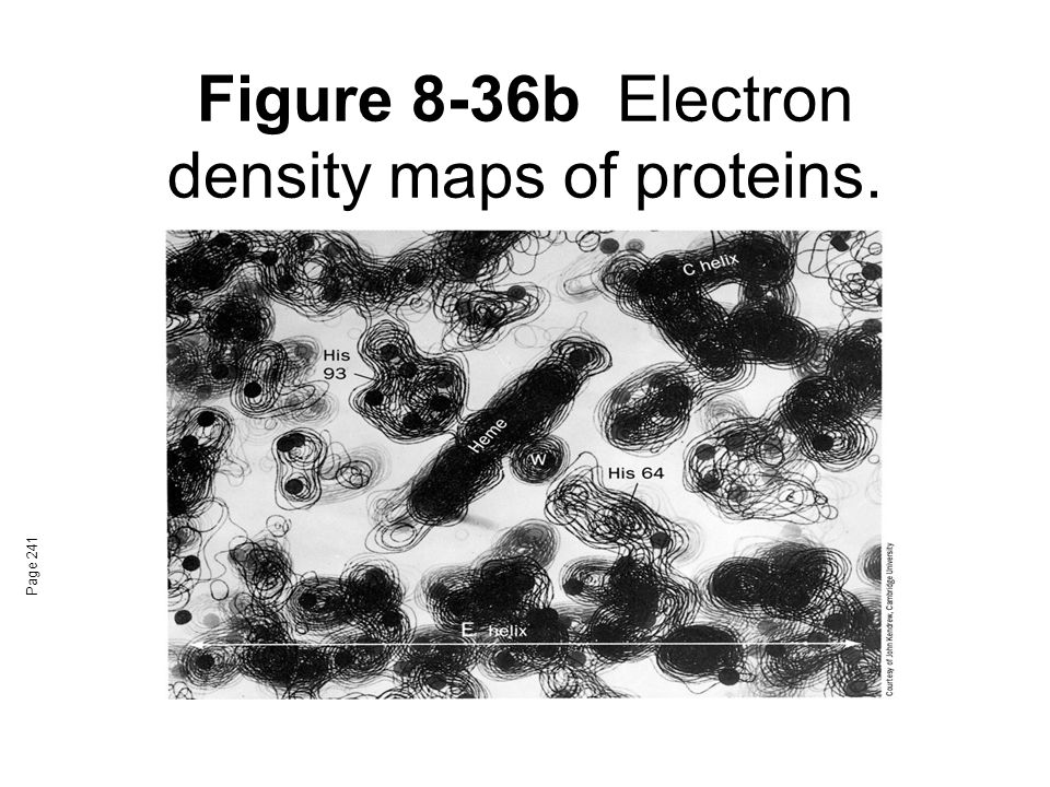 Figure 8-36b Electron density maps of proteins.
