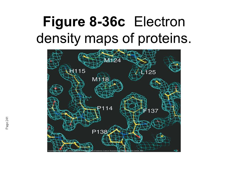 Figure 8-36c Electron density maps of proteins.