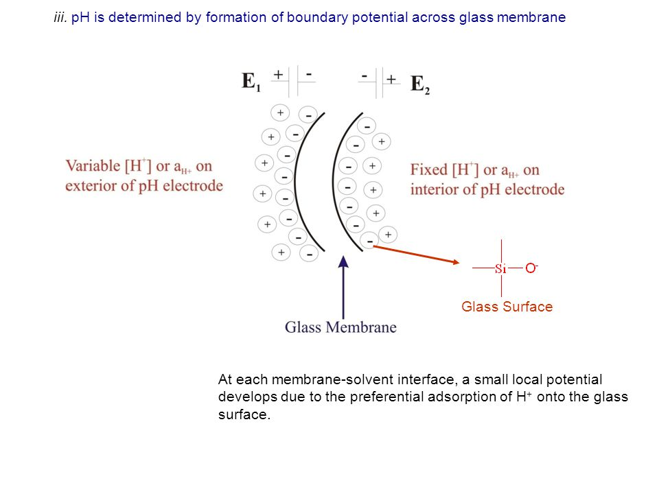 develops due to the preferential adsorption of H+ onto the glass