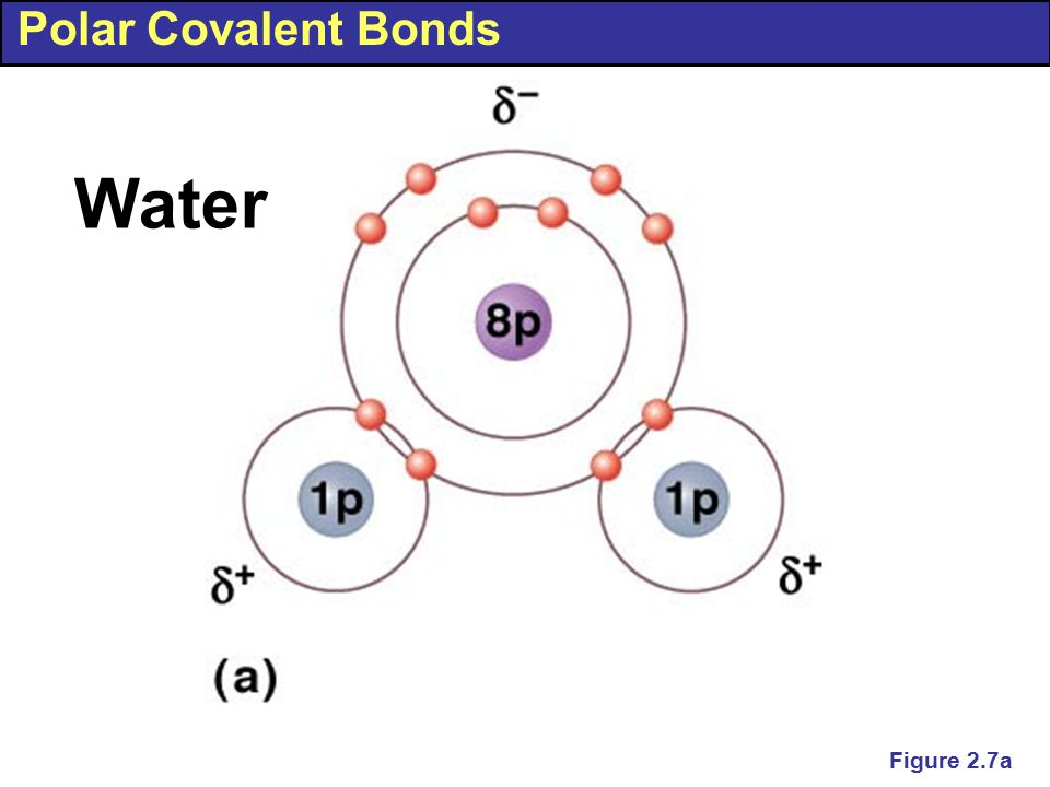 Polar Covalent Bonds Water Figure 2.7a