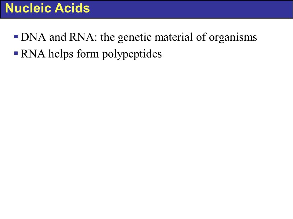 Nucleic Acids DNA and RNA: the genetic material of organisms