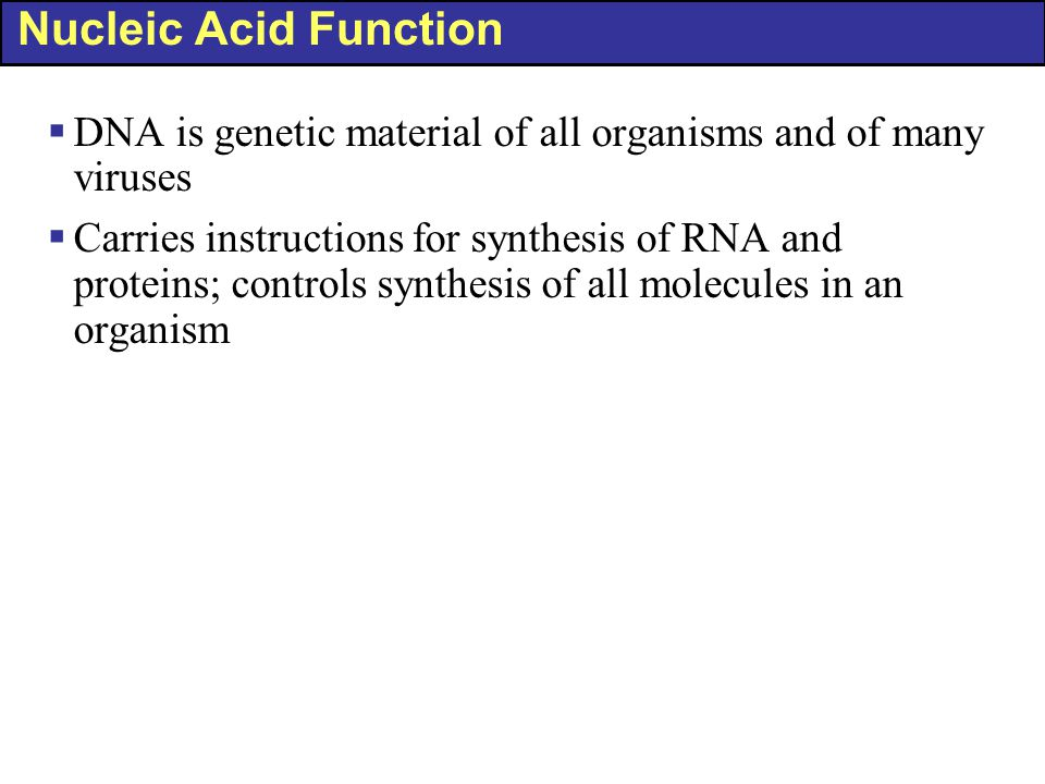 Nucleic Acid Function DNA is genetic material of all organisms and of many viruses.