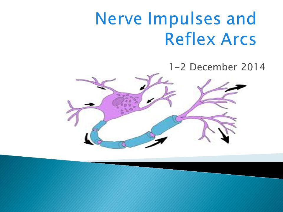 Nerve Impulses and Reflex Arcs