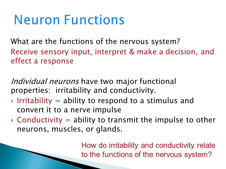 Neuron Functions What are the functions of the nervous system