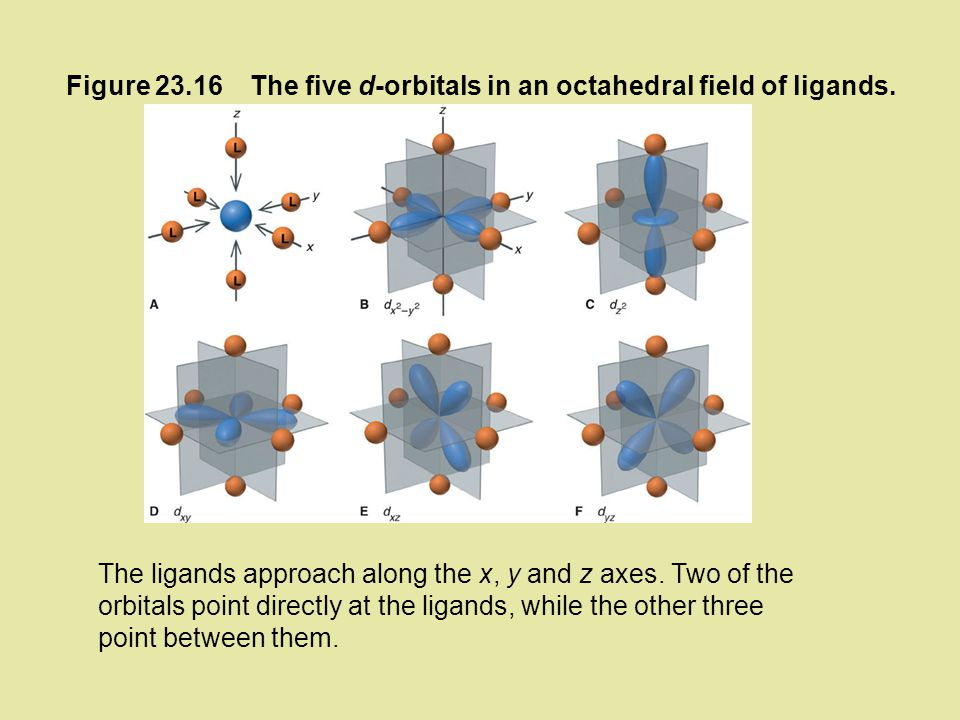 Figure 23.16 The five d-orbitals in an octahedral field of ligands.