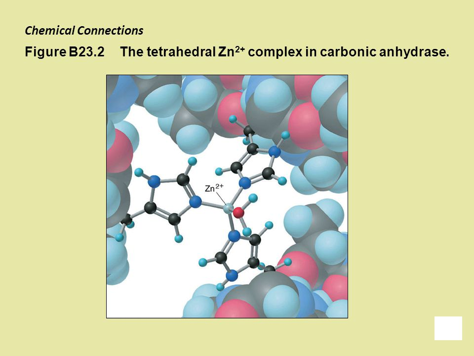 Chemical Connections Figure B23.2 The tetrahedral Zn2+ complex in carbonic anhydrase.