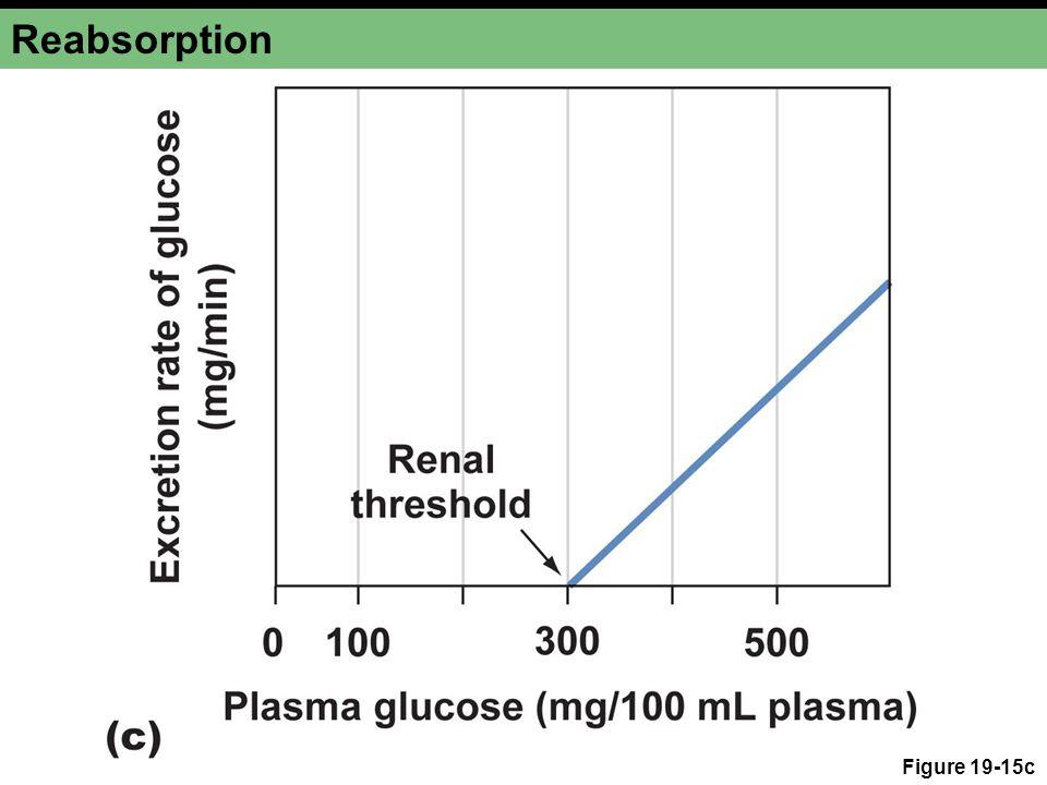 Reabsorption Figure 19-15c