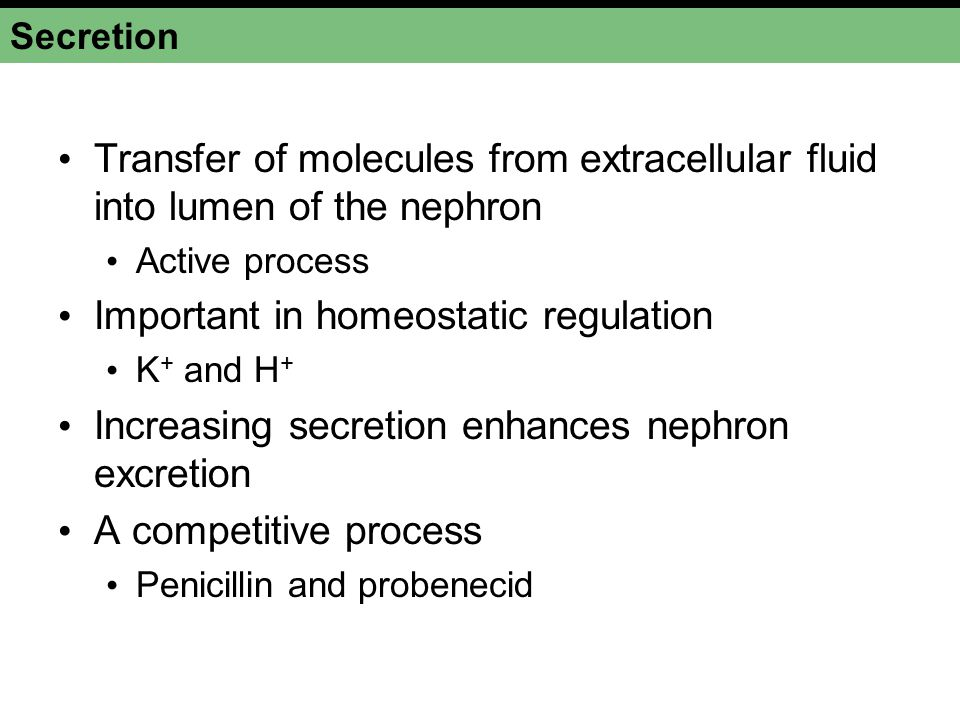 Important in homeostatic regulation