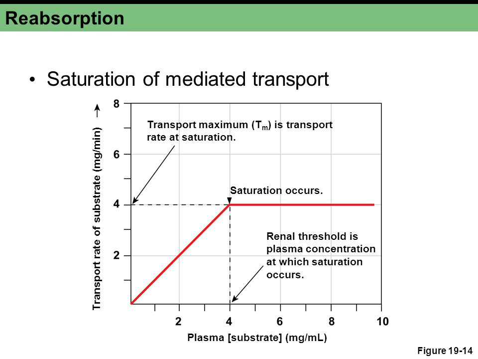 Saturation of mediated transport