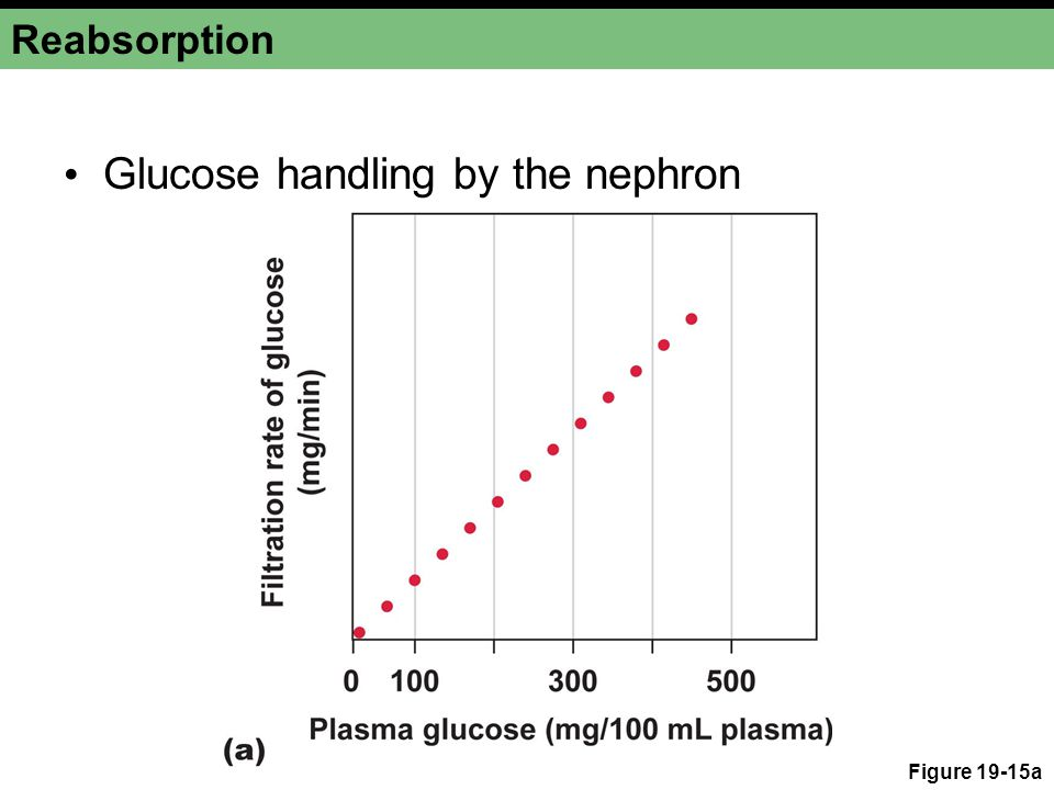 Glucose handling by the nephron