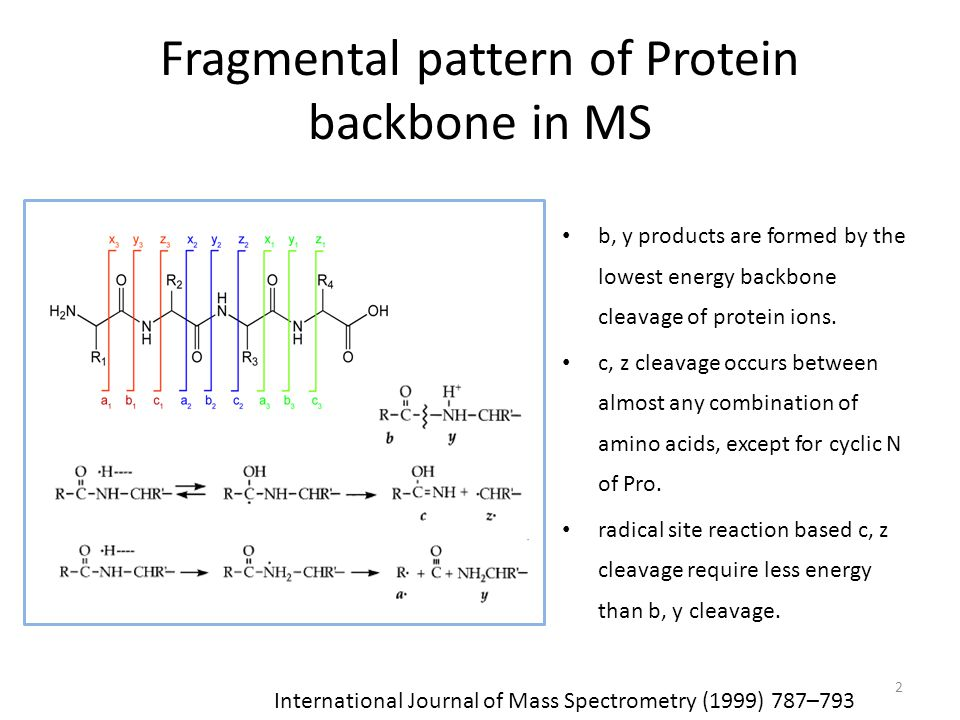 Fragmental pattern of Protein backbone in MS