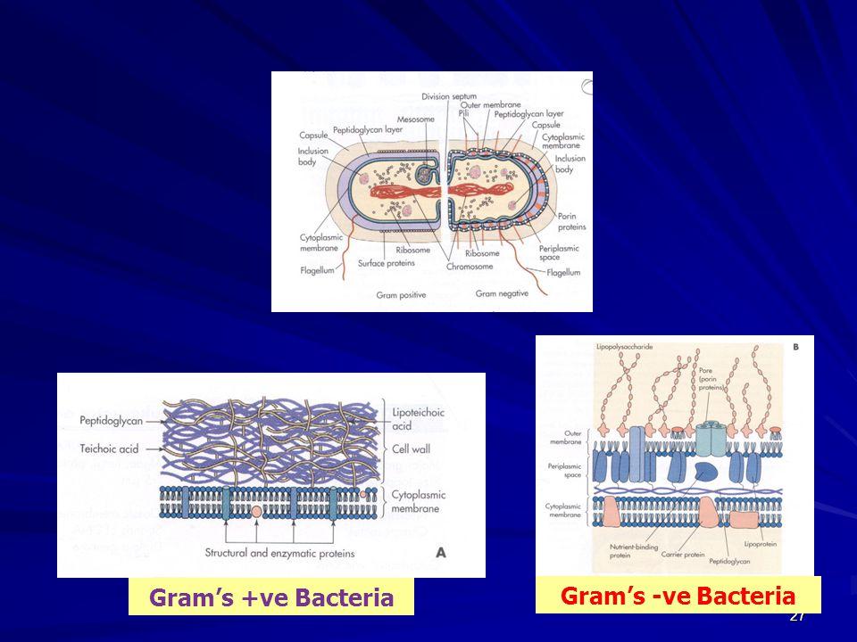 Gram's +ve Bacteria Gram's -ve Bacteria