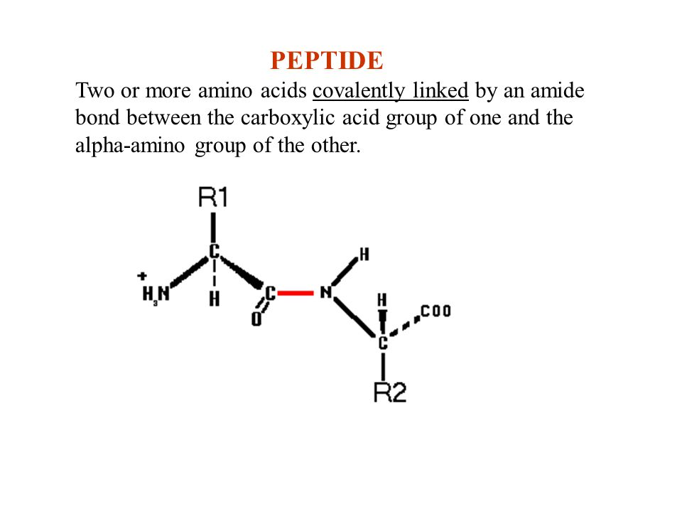 PEPTIDE Two or more amino acids covalently linked by an amide bond between the carboxylic acid group of one and the alpha-amino group of the other.