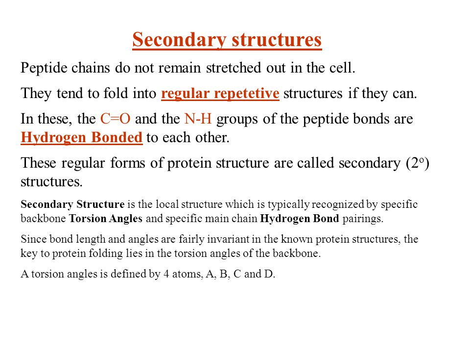Secondary structures Peptide chains do not remain stretched out in the cell. They tend to fold into regular repetetive structures if they can.