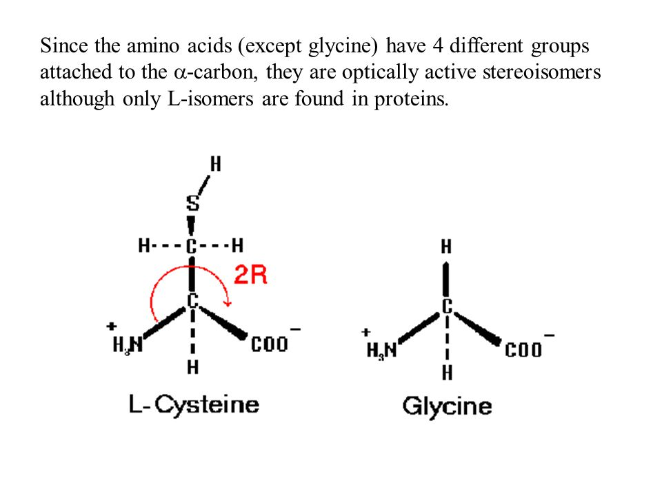 Since the amino acids (except glycine) have 4 different groups attached to the a-carbon, they are optically active stereoisomers although only L-isomers are found in proteins.
