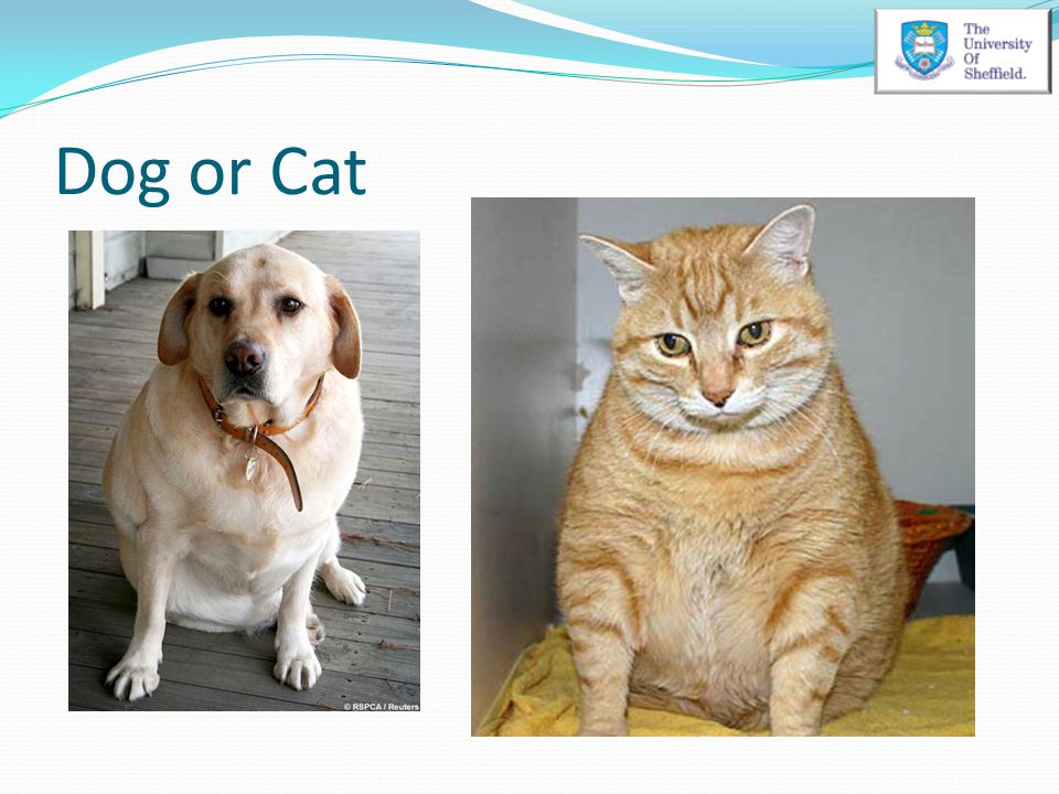 Dog or Cat