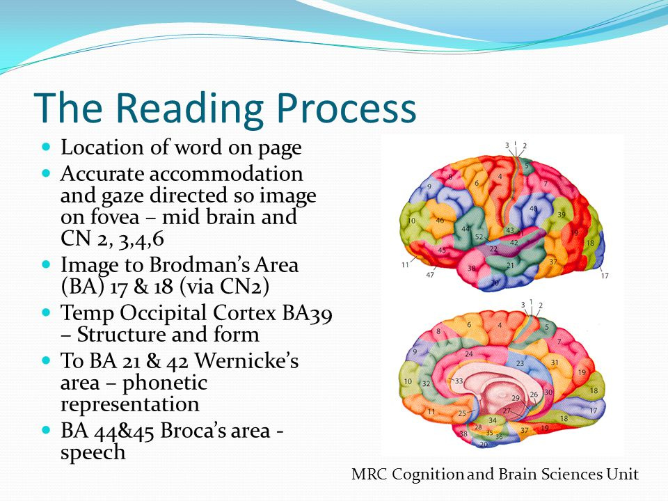 The Reading Process Location of word on page