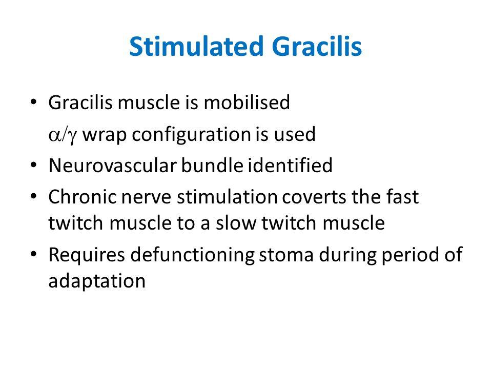 Stimulated Gracilis Gracilis muscle is mobilised