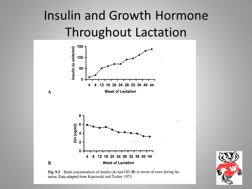 Insulin and Growth Hormone Throughout Lactation