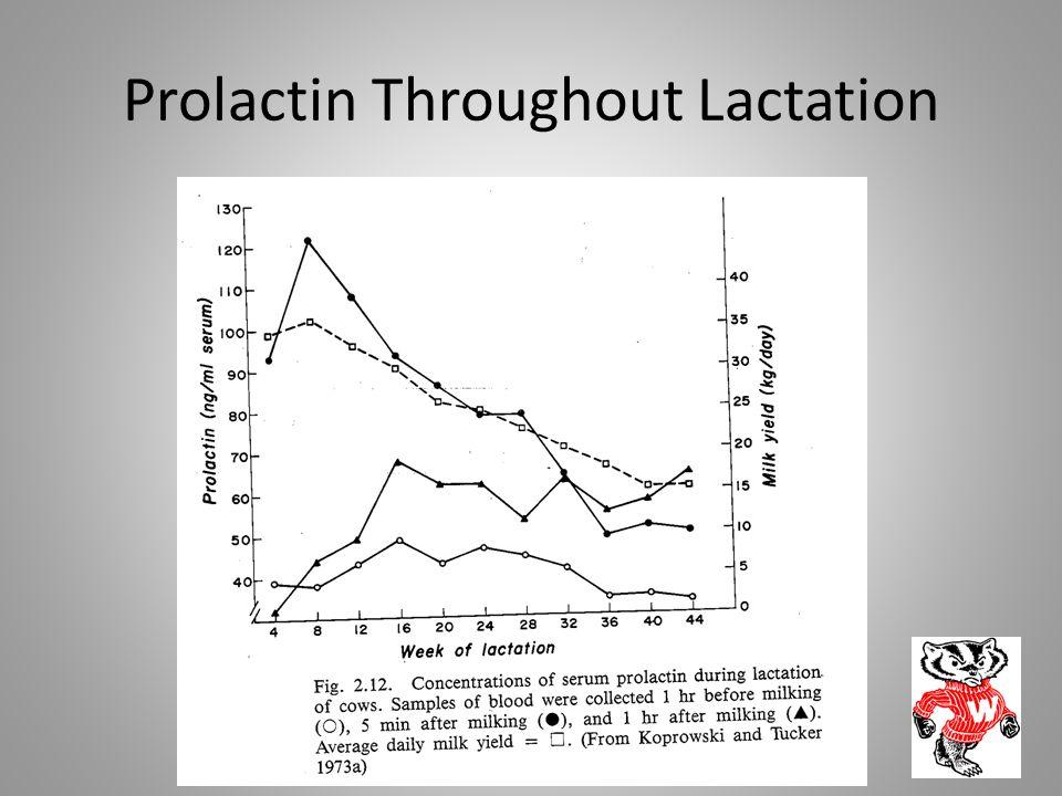Prolactin Throughout Lactation