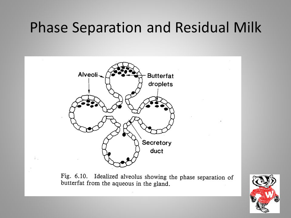 Phase Separation and Residual Milk