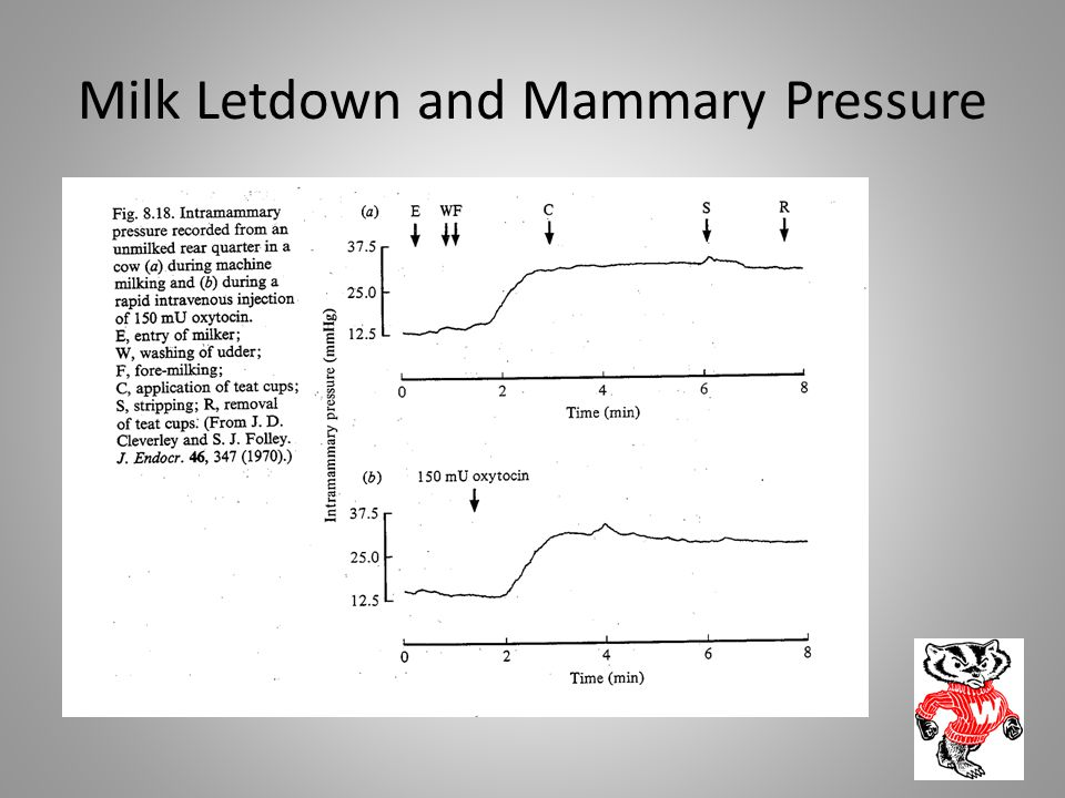 Milk Letdown and Mammary Pressure