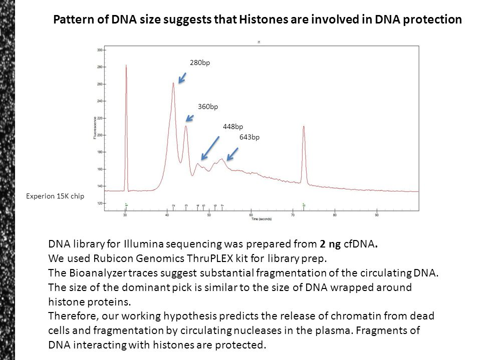 Pattern of DNA size suggests that Histones are involved in DNA protection