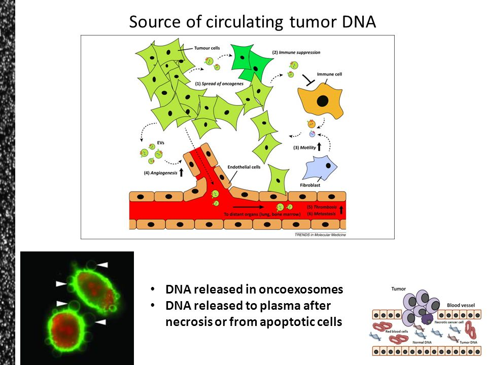 Source of circulating tumor DNA