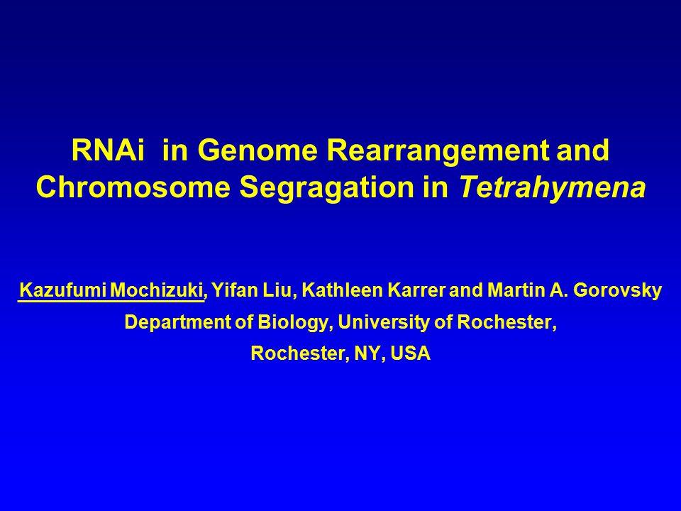 RNAi in Genome Rearrangement and Chromosome Segragation in Tetrahymena