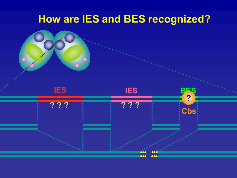How are IES and BES recognized