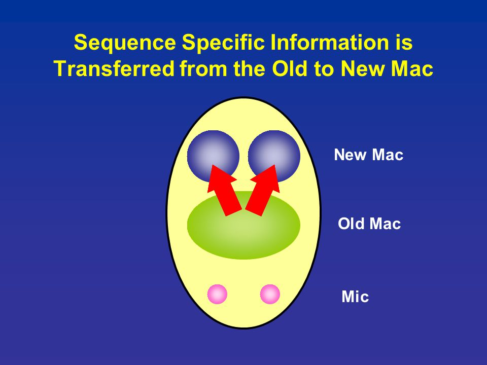 Sequence Specific Information is Transferred from the Old to New Mac