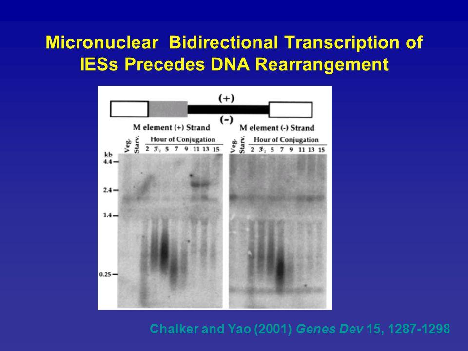 Chalker and Yao (2001) Genes Dev 15, 1287-1298