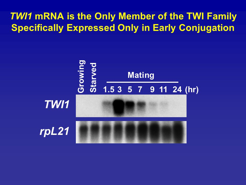 TWI1 rpL21 Mating Growing Starved 1.5 3 5 7 9 11 24 (hr)