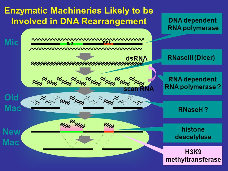 Enzymatic Machineries Likely to be Involved in DNA Rearrangement