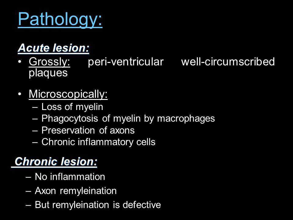 Pathology: Acute lesion:
