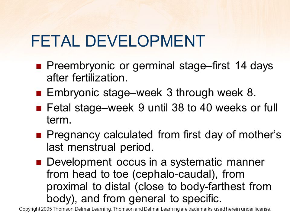FETAL DEVELOPMENT Preembryonic or germinal stage–first 14 days after fertilization. Embryonic stage–week 3 through week 8.