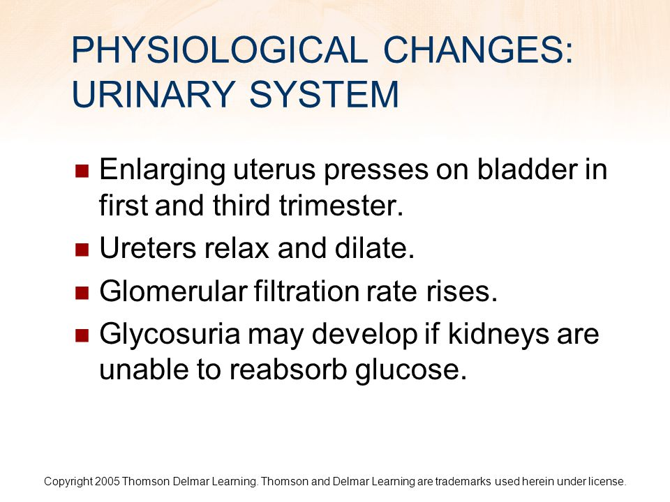 PHYSIOLOGICAL CHANGES: URINARY SYSTEM