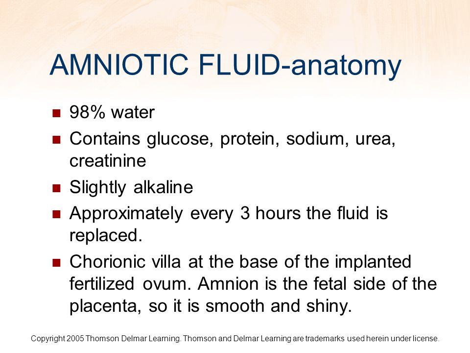 AMNIOTIC FLUID-anatomy