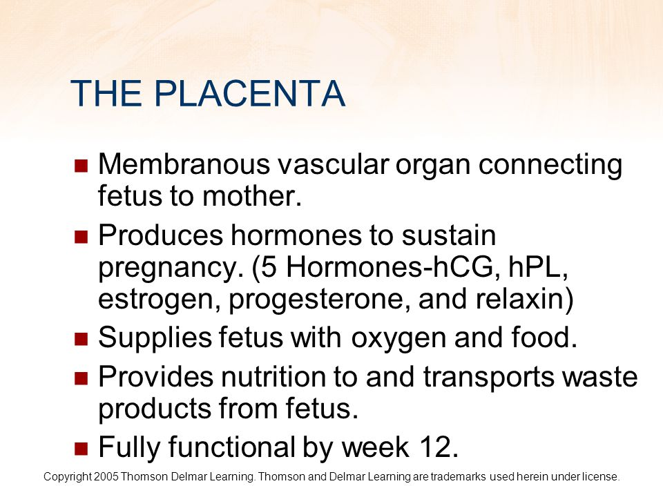 THE PLACENTA Membranous vascular organ connecting fetus to mother.