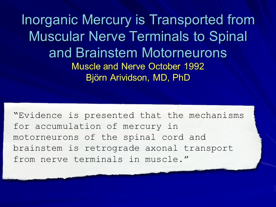 Inorganic Mercury is Transported from Muscular Nerve Terminals to Spinal and Brainstem Motorneurons Muscle and Nerve October 1992 Björn Arividson, MD, PhD