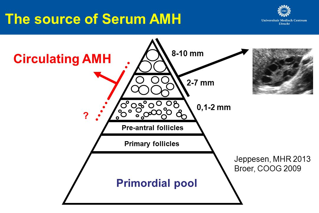 The source of Serum AMH Circulating AMH Primordial pool 8-10 mm