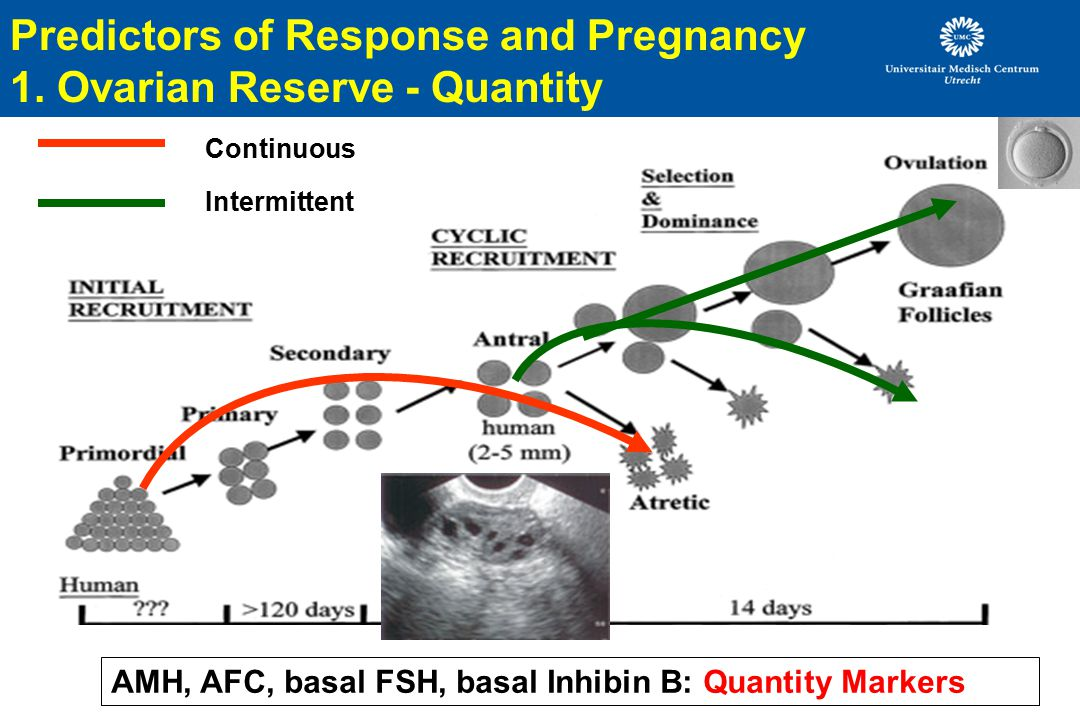 Predictors of Response and Pregnancy 1. Ovarian Reserve - Quantity