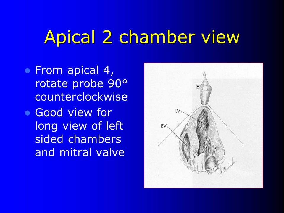 Apical 2 chamber view From apical 4, rotate probe 90° counterclockwise
