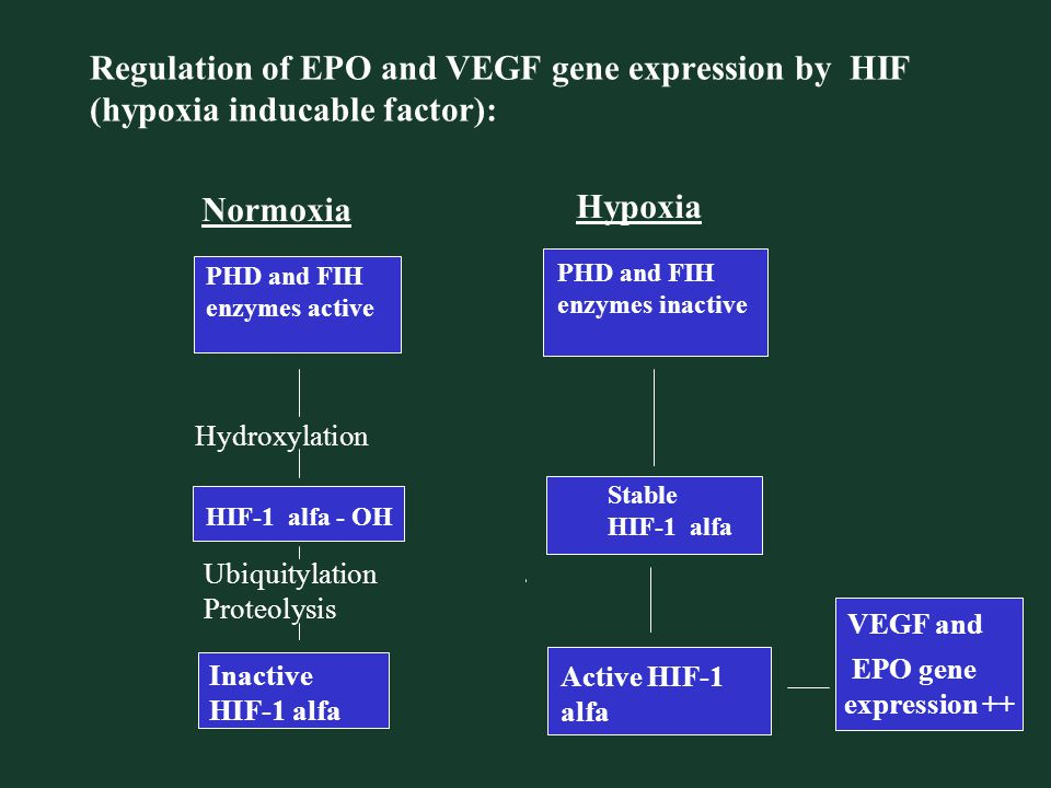 Regulation of EPO and VEGF gene expression by HIF (hypoxia inducable factor):