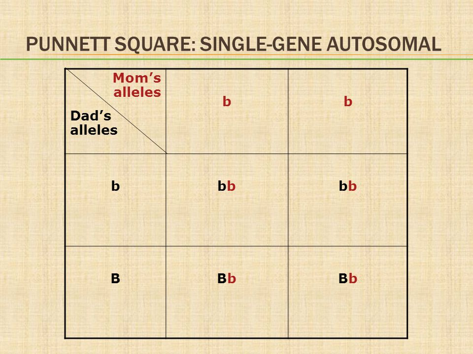 Punnett Square: Single-Gene Autosomal