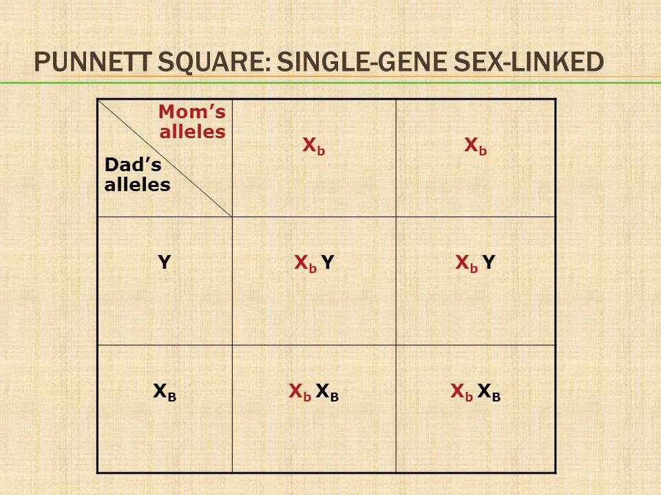 Punnett Square: Single-Gene Sex-Linked