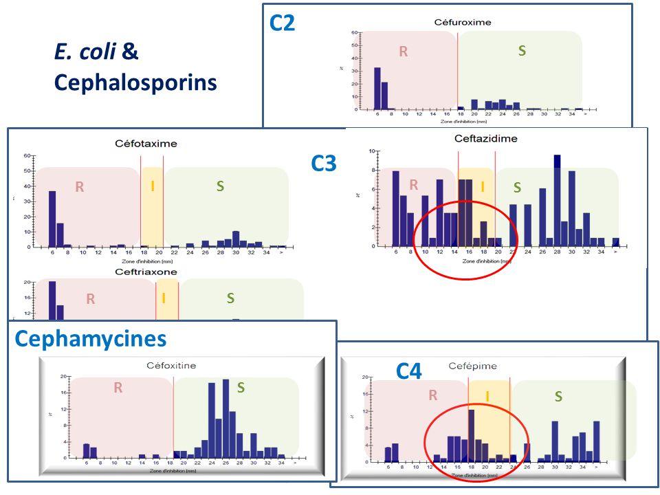 E. coli & Cephalosporins