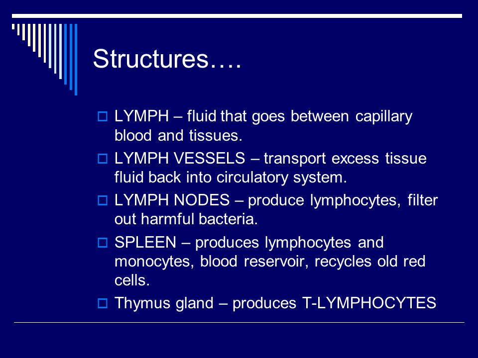 Structures…. LYMPH – fluid that goes between capillary blood and tissues.
