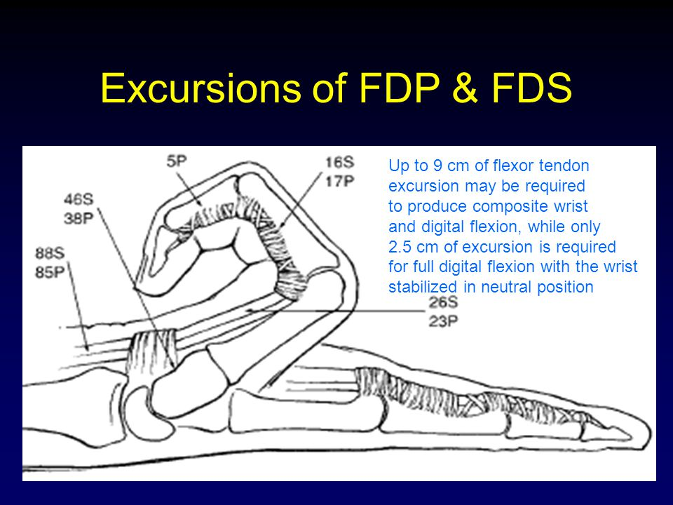 Excursions of FDP & FDS Up to 9 cm of flexor tendon
