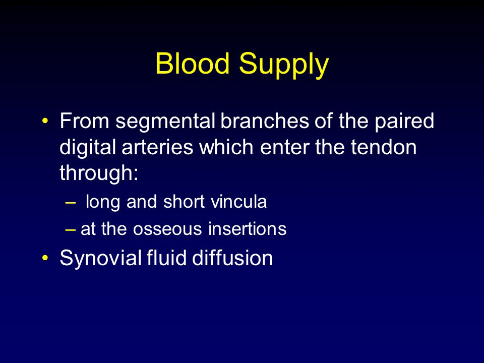 Blood Supply From segmental branches of the paired digital arteries which enter the tendon through: